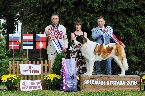 BEST IN SHOW + BEST IN SHOU JUNIOR - LUMELAVIIN BRILIANT KIND OF HEART